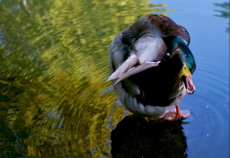 Crise aviaire: une première aide régionale de 4,5 M€ annoncée