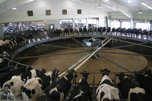 Des paysans aux fermes-usines : la menace est dans le pré
