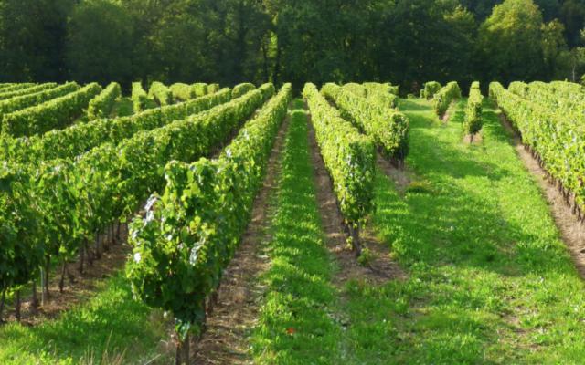 3 mois de retard pour les subventions de l'UE à la viticulture