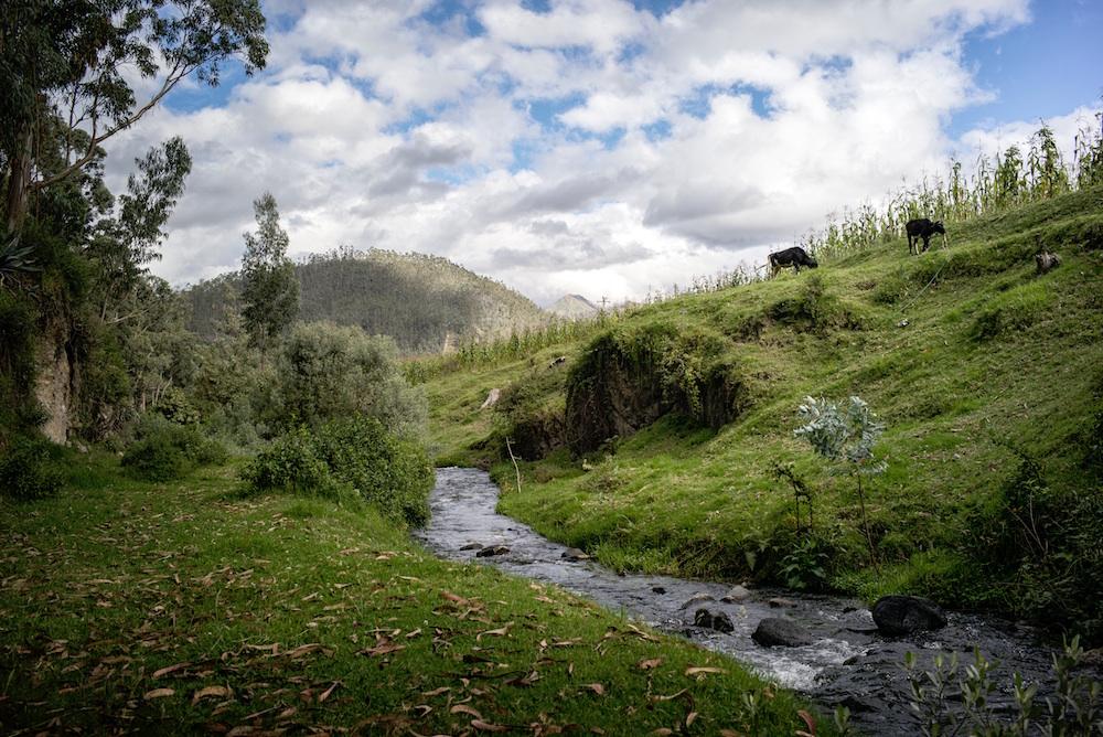 Petit cours d'eau sur paysage vallonné