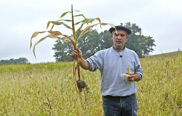 """Bernard Pouey, agriculteur """"bio"""" montre un épi de maïs avant de détruire volontairement sa parcelle de maïs d'un demi-hectare """"contaminée"""", selon des associations anti-OGM, par des cultures OGM avoisinantes, le 11 octobre 2007 à Saint-Dos. Bernard Pouey a expliqué à la presse que son maïs a été contaminé à distance, par pollinisation, dans cette zone où d'importantes surfaces de maïs OGM ont été semées. AFP PHOTO DANIEL VELEZ / AFP PHOTO / DANIEL VELEZ"""