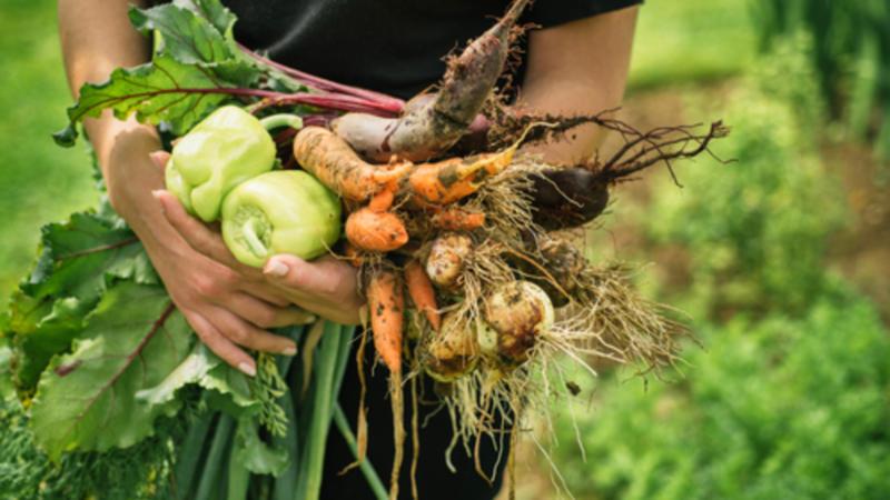Les Français consomment toujours plus de bio, mais gare à la pénurie