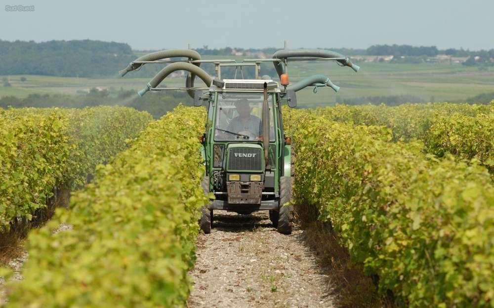 Pesticides dans les vignes en Charente: des cancers enfin reconnus