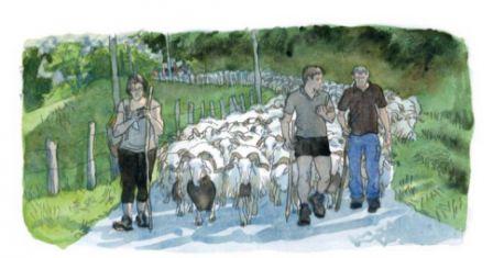 illustration dessinée d'un troupeau et de ses bergers