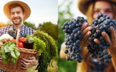 Une nouvelle étude Insee confirme que l'agriculture bio est plus rentable