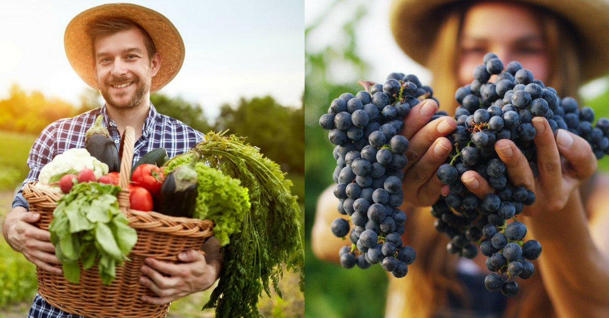 Agricultuers bio avec leur production